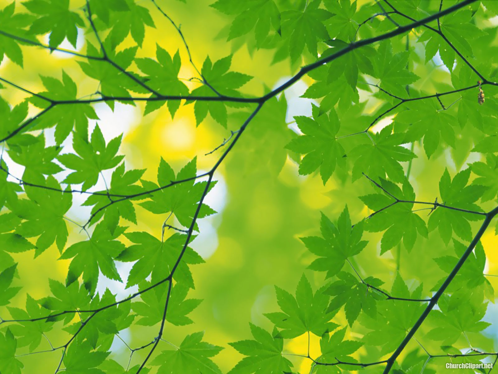 Fresh Green Leaves Powerpoint Background – Church Clipart
