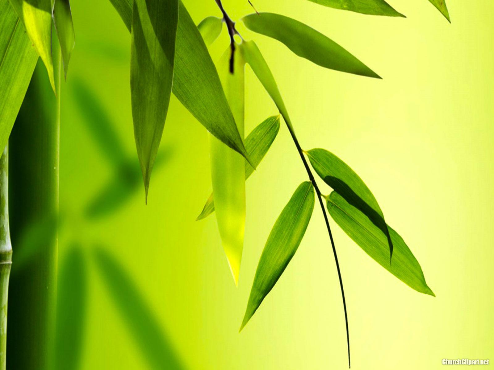HD Bamboo Background