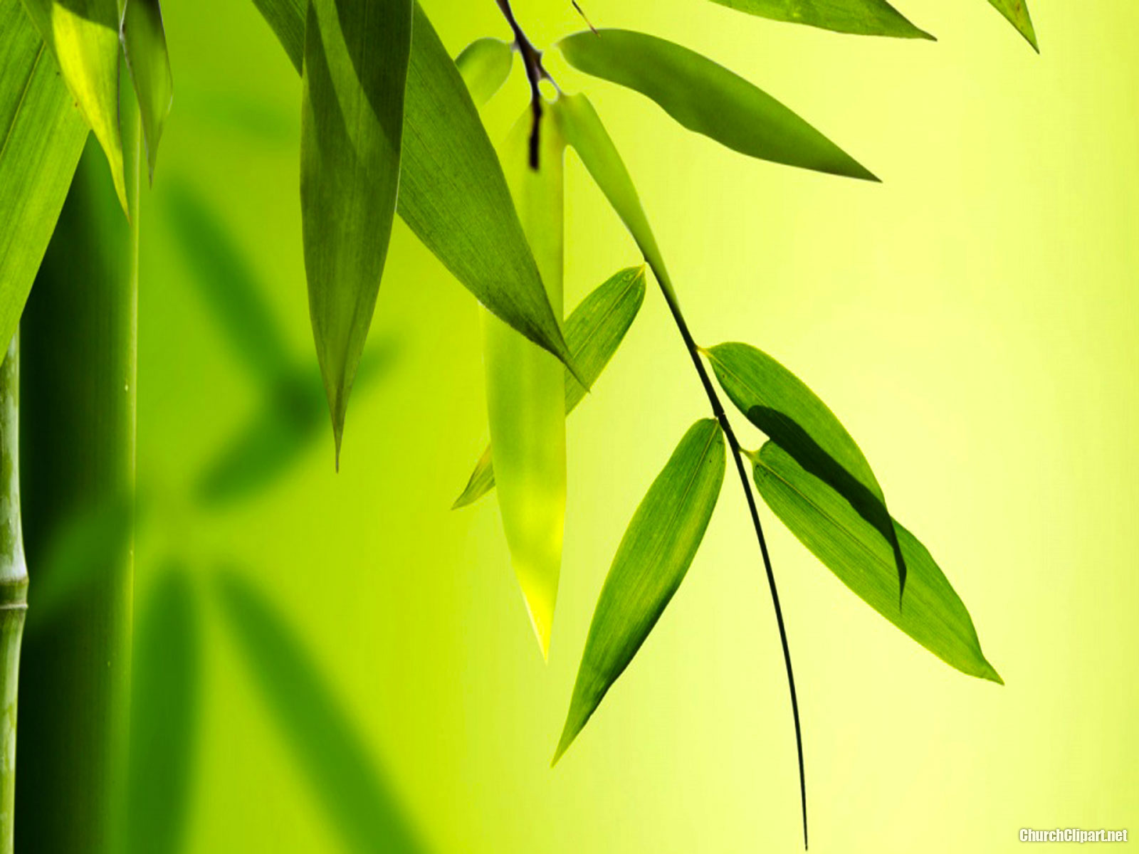 HD Bamboo Background